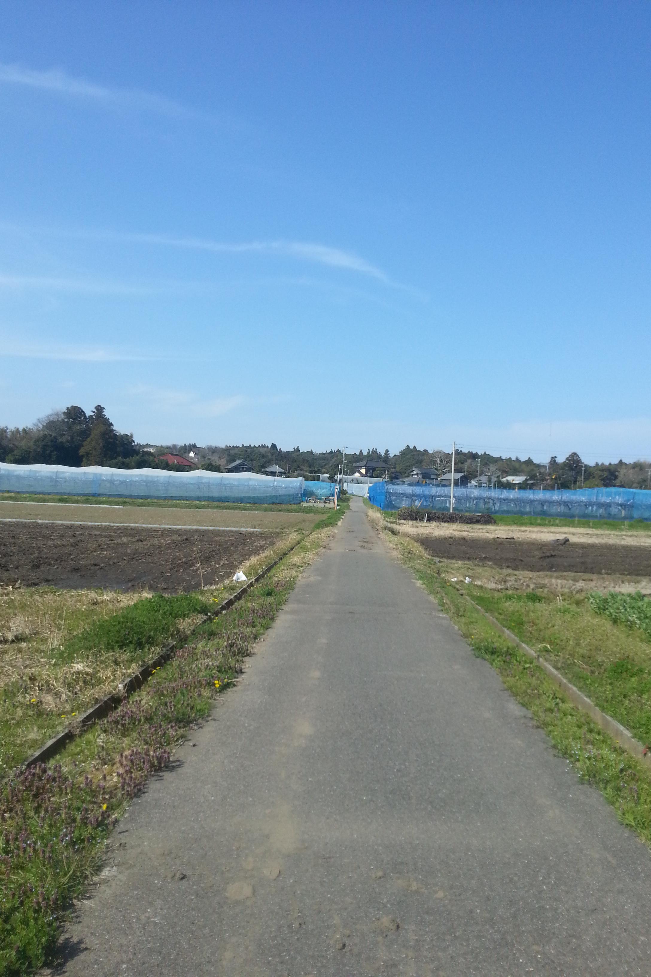 いすみ市 畑散歩道